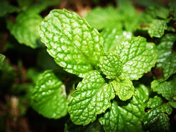 overnight home remedies for acne mint