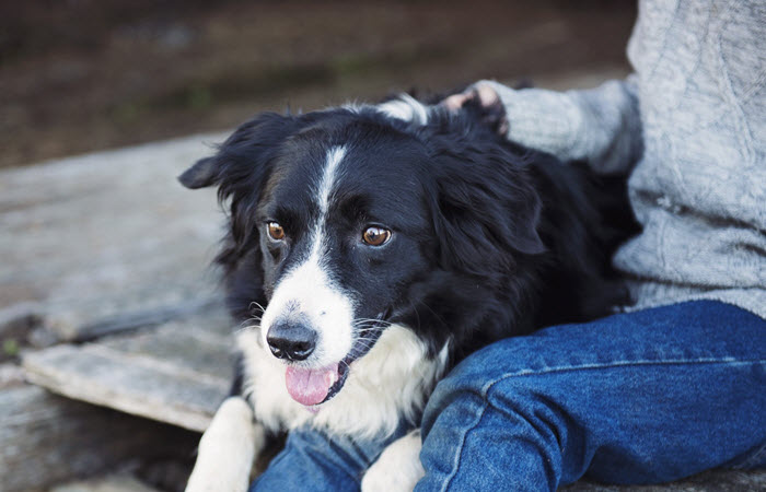 How To Train Your Dog To Be An Emotional Support Animal - NurseBuff